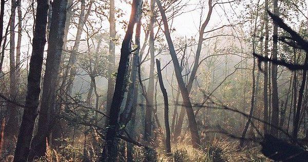 Bosque misterioso.