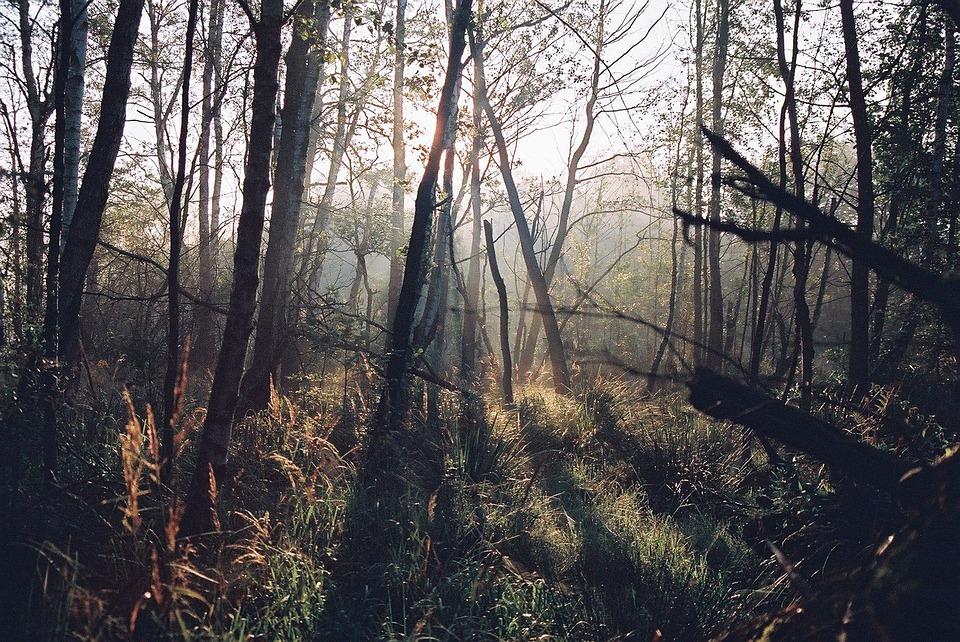 Los bosques misteriosos