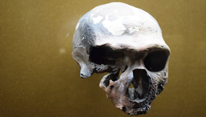 Restos neanderthales en Krapina