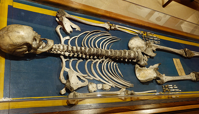 El gigante extremeño del Museo de Antropología de Madrid