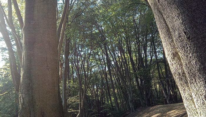 Ambresbury Banks en el bosque de Epping